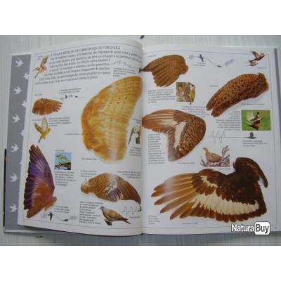 Les livres sur les plumes  __00005_livre-Le-nid-l-oeuf-l-oiseau-GALLIMARD