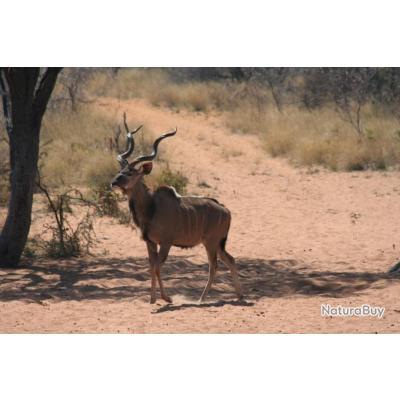 Vend Séjour de chasse en Afrique de Sud