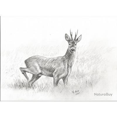 Joli photocopie d 39 un fusain brocard chasse troph e - Dessin de chasse ...