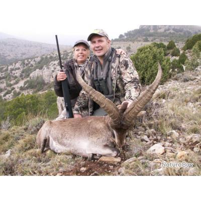 Chasse en Espagne ( ibex et mouflon à manchette )