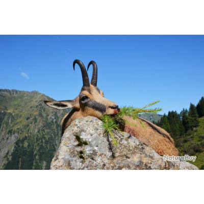 Autriche: 2 jours d'approche chamois & marmotte dans les alpes carniques