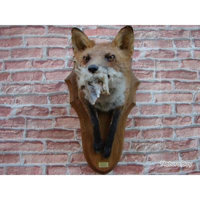 buste de renard et sa proie , taxidermiste professionnel