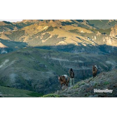 Chasse du Cerf Elaphe ds Andes en Argentine - Forfait  10 Jours