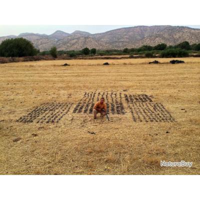 Chasse aux Petits Gibiers au Maroc : tourterelles, bécassines, cailles, perdrix