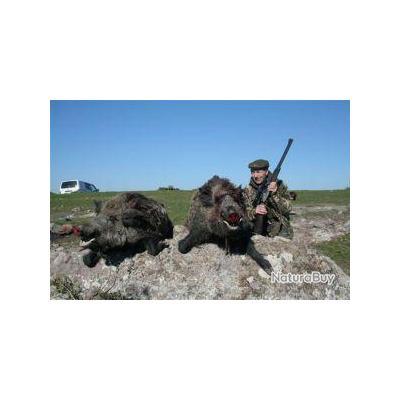 Chasse à l'Approche aux Sangliers et à l'Ibex Bezoard en Turquie