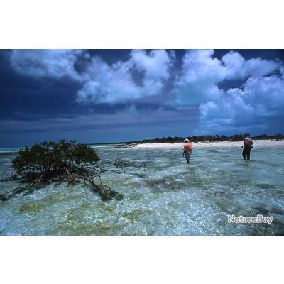 Pêche à la Mouche au Bahamas