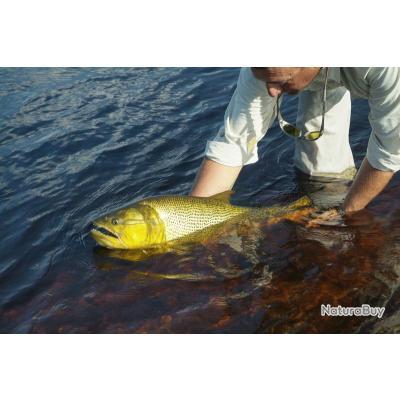 Voyage de Pêche en Argentine : Marais de l'Ibera : Dorado