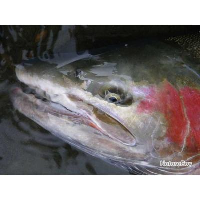 Voyage de Pêche au Canada : Colombie Britannique : Vallée de la Skeena