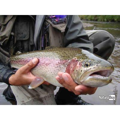 La pêche à orenbourge et les domaines 2017