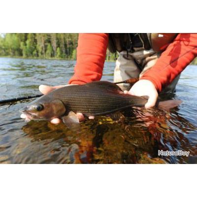 Voyage de Pêche Suède : Les ombres de la rivière Gimän