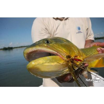 Voyage de Pêche en Argentine : les Dorados du Haut Panama