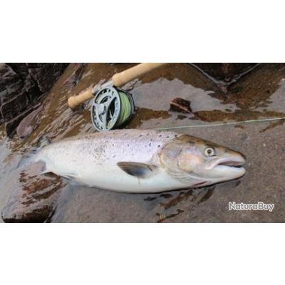 Voyage de Pêche en Russie : Les saumons et truites de mer de la rivière Strelna