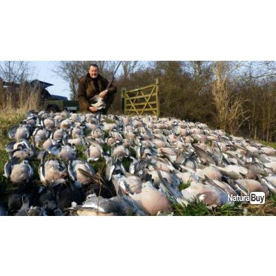 chasse aux pigeons en angleterre voyage de chasse 1849444. Black Bedroom Furniture Sets. Home Design Ideas