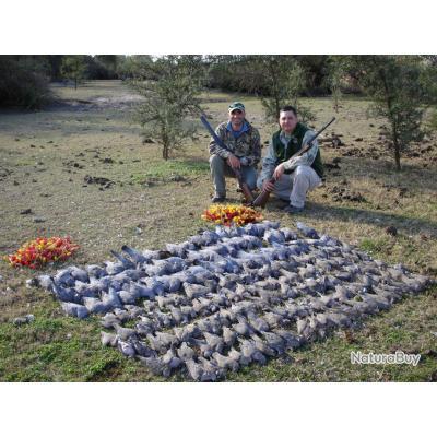 Chasse aux tourterelles et pigeons en argentine voyage de chasse 2001196 - Faire fuir les pigeons ...