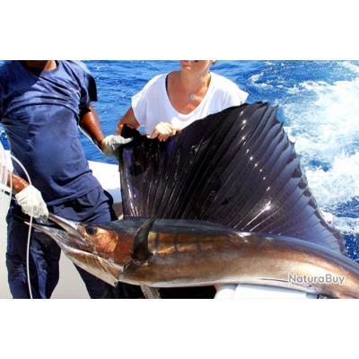 Pêche au Sénégal Saly Espadon voilier 2020-2021