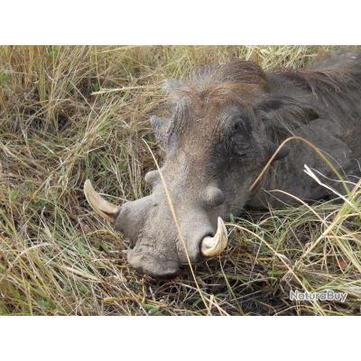 Séjour de chasse en GAMBIE campement du BOUMAC