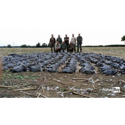 Séjour de Chasse aux Pigeons Ramiers en Angleterre Top Budget 2021-2022