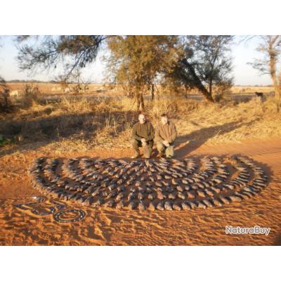 SAFARI MIXTE PETITS & GRANDS GIBIERS  Jean-François  recommande INGWE SAFARIS en AFRIQUE du SUD,