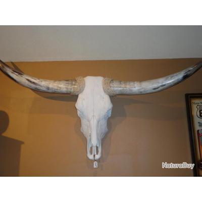 tete de vache texane mase in usa taille xl de 110 cm. Black Bedroom Furniture Sets. Home Design Ideas
