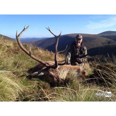 Chasse au cerf en Écosse dans les Highlands.