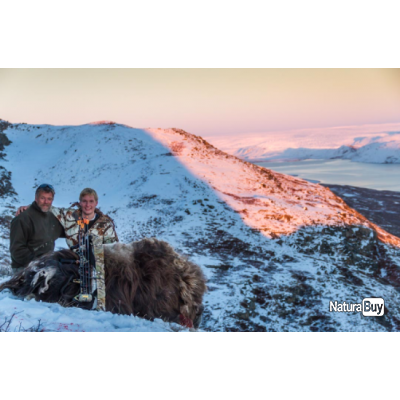 Groenland: Combo boeuf musqué et caribou, tout compris