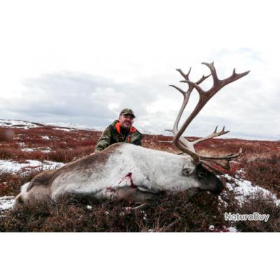 Groenland: Caribou trophée à l'approche, tout compris