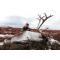 petites annonces chasse pêche : Groenland: Caribou trophée à l'approche, tout compris