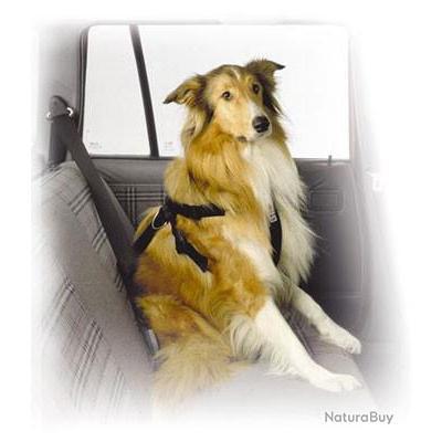 harnais de s curit voiture pour chien moyen harnais 2871010. Black Bedroom Furniture Sets. Home Design Ideas