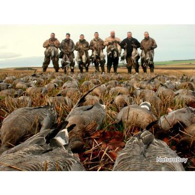 Adresse chasse des oies en Ecosse