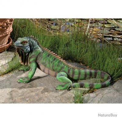 taxidermie reptile