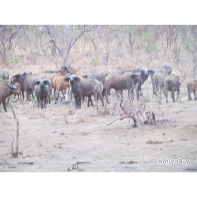 BURKINA FASO - GRANDS SAFARIS