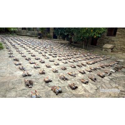 Chasse d'exception à la perdrix rouge en Espagne
