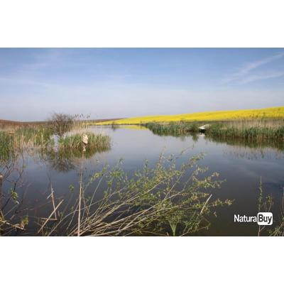 Chasse de la caille, perdrix et canard en Roumanie