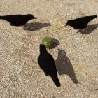 carrousel manège a corbeaux ! PROMO ! top prix ! trio infernal  a corbeaux