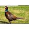petites annonces chasse pêche : Cherche action de chasse secteur Plaisance du Touch