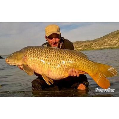Pêche de la carpe en Espagne Mequinenza