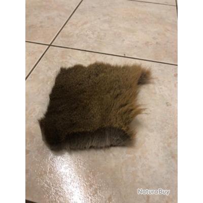 Poil de chevreuil en pelage d hiver