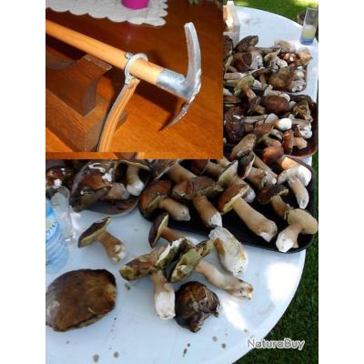 Canne a champignons