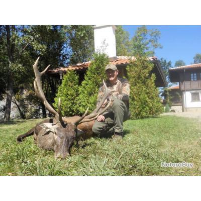Chasse cerf au brame en Roumanie