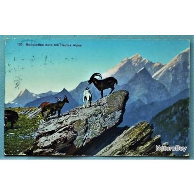 cch 52 - BOUQUETINS dans Les Hautes-Alpes - thèmes: chasse, animaux, montagnes, Suisse