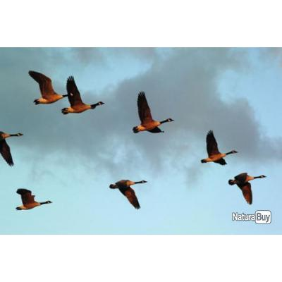 CHASSE AUX CANARDS - Chasse Egypte