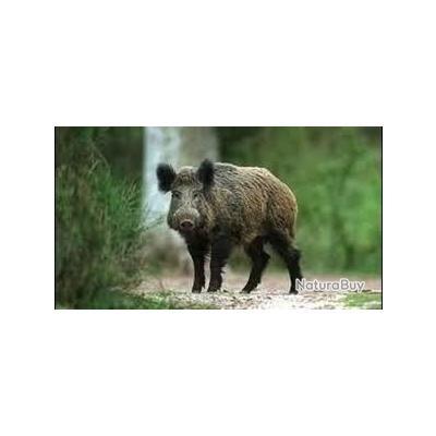 Week-end chasse au sanglier dans l'Aude (11) au coeur des Corbières en tout inclus