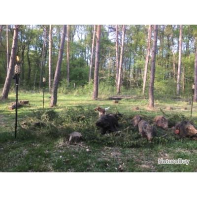 Journée de chasse aux gros gibiers