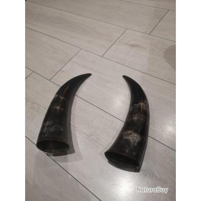 Paire de corne de ZÉBU  Noir de Madagascar vidé idéal verre viking ou poire à poudre ( pas ivoire)