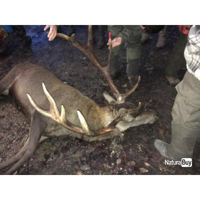 cherche parts de chasse