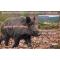 petites annonces chasse pêche : Action de chasse cervidés/chevreuil/sanglier nord Hérault