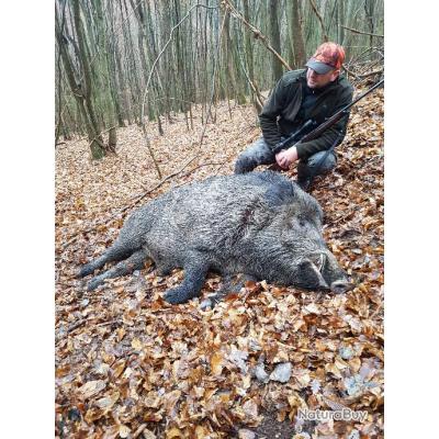Battue de sangliers attila en Roumanie - Voyage de chasse