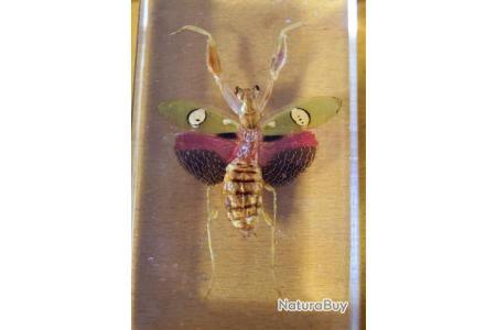 A l/'unité Taxidermie,Entomologie,collection,Cadeau Véritable Scorpion Noir