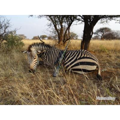 Safaris d'exception en Namibie
