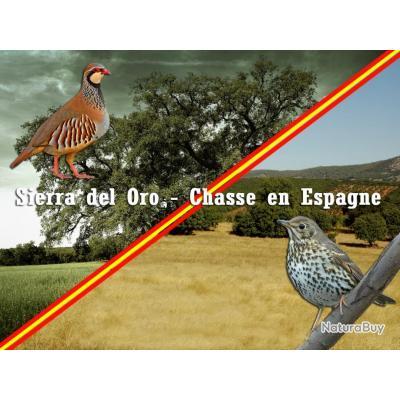 Chasse à la Grive et Perdrix en Espagne
